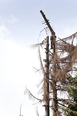 树皮甲虫,花木匠,链锯,垂直画幅,留白,风险,户外,干的,云杉