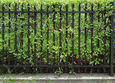 篱笆,安全护栏,警卫人员,美,水平画幅,枝繁叶茂,无人,夏天,大门,铁