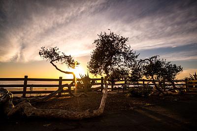 圣莫尼卡,美国,加利福尼亚,帕里萨德游乐场,自然,水,公园,水平画幅,地形,景观设计