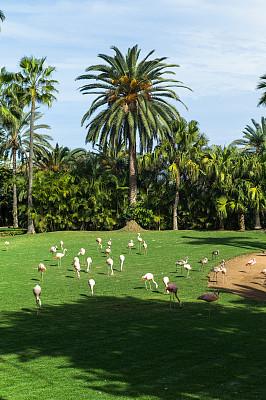 夏天,公园,火烈鸟,自然,垂直画幅,无人,动物,鸟类,植物学,粉色