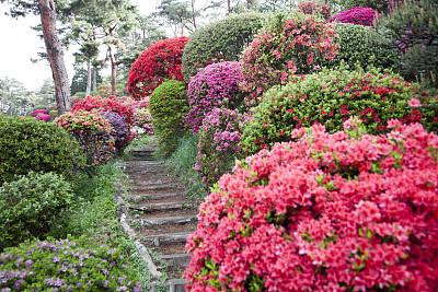 杜鹃花,小路,园林,星和园,选择对焦,台阶,水平画幅,无人,夏天,户外