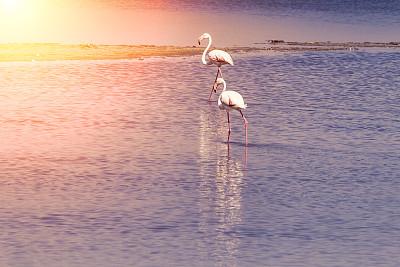 卡马尔格,火烈鸟,粉色,小火烈鸟,罗讷河,盐湖,罗讷省,热带鸟,水,颈