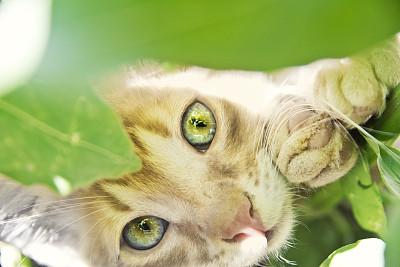小猫,园林,流浪动物,美,不确定,水平画幅,注视镜头,动物耳朵,爪子,家庭生活