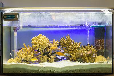 水族館,魚缸,魚類,植物群,大群動物,脂鯉,蘇門答臘印度尼西亞,霓虹色,水,休閑活動