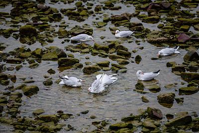 海鸥,自然,图像聚焦技术,选择对焦,留白,野生动物,水平画幅,水平线,鸟类,动物身体部位