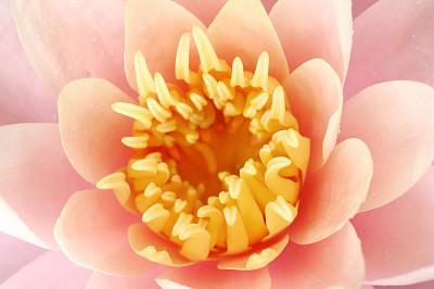 水,百合花,自然,荷花,水平画幅,睡莲,无人,正上方视角,湿,仅一朵花