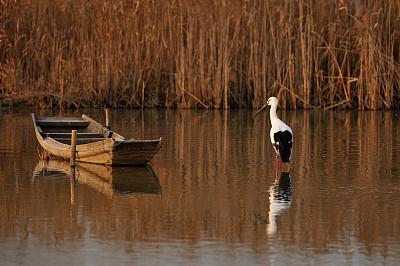 野生动物保护区,丹顶鹤,白鹳,江苏省,水,美,底片效果,水平画幅,无人,鸟类