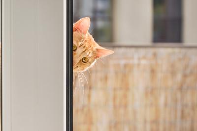 斑纹猫,从外向里看,姜黄,拉凡他那石拱,姜黄色的猫,猫,留白,水平画幅,注视镜头,无人