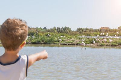 卡马尔格,火烈鸟,粉色,男孩,小火烈鸟,罗讷河,罗讷省,罗纳河口,颈,动物腿