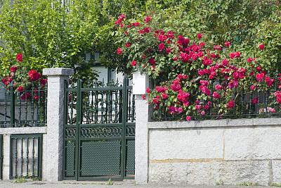 铸铁,石墙,玫瑰,大门,灌木,红色,充满的,水平画幅,无人,古典式