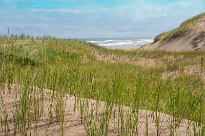 加拿大,沙丘,爱德华王子岛国家公园,爱德华王子岛,自然,国家公园,水平画幅,无人,夏天,户外