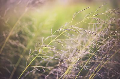 草类,自然,野生植物,自然美,日光,白昼,背景,热,纤细的,热霾