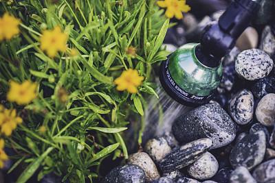 花坛,动物手,植物群,洒水机,撒下,水,水平画幅,枝繁叶茂,软管,无人