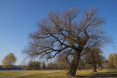 冬天,公园,水平画幅,无人,早晨,户外,草,树林,田地,植物