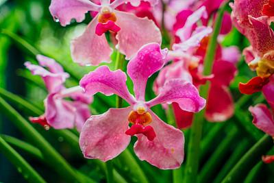 新加坡市,植物园,兰花,新加坡,自然,公园,水平画幅,绿色,无人,夏天