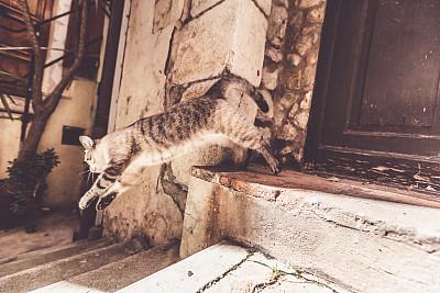 门,猫,圆石,水平画幅,古老的,夏天,建筑外部,房屋,一只动物,建筑结构