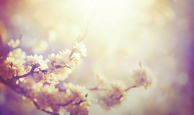 梅花,花朵,灵性,樱桃树,苹果树,樱花,花粉,李树,日光,选择对焦