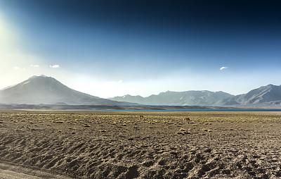 阿根廷,火山,门多萨,大羊驼,门多萨省,国际边境,当地著名景点,生态旅游,火山地形,南美