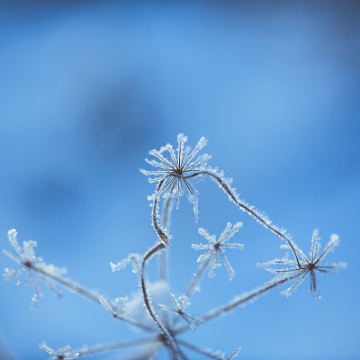 冬天,冻结的,植物群,冻疮,冰晶,选择对焦,纹理效果,无人,干花,户外