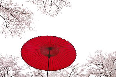 伞,日本,樱桃树,在下面,阳伞,星和园,美,留白,灵感,里山