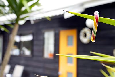 夏天,居住区,背景聚焦,丝兰木,丝兰,甘蔗糖,水平画幅,无人,澳大拉西亚
