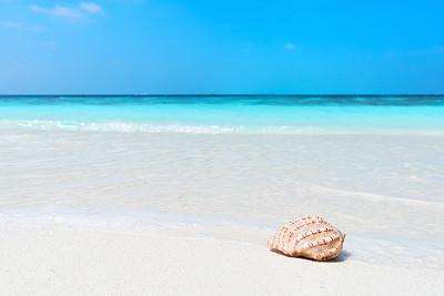 贝壳,夏天,海滩,背景,马尔代夫,海螺,玻利尼西亚,水,天空,留白