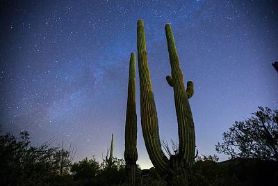 萨挂诺仙人掌,银河系,在之后,皮马县,索诺兰沙漠,亚利桑那,天空,水平画幅,夜晚,无人