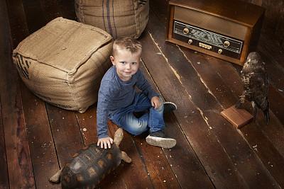 硬木地板,男孩,毛絨玩具,動物標本,閃光燈,海龜,鷹,一見鐘情,正面視角,留白