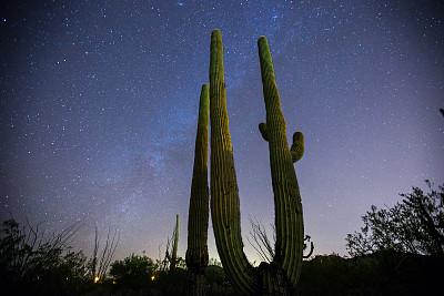 仙人掌,银河系,在上面,索诺兰沙漠,皮马县,萨挂诺仙人掌,亚利桑那,天空,水平画幅,夜晚