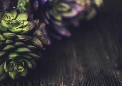 静物,背景,多肉植物,肉质植物,桌面射击,柔焦,留白,褐色,边框,水平画幅