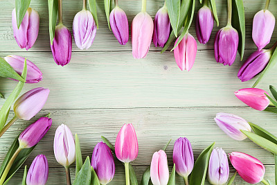 郁金香,生日卡,花卉花环,贺卡,留白,复活节,边框,水平画幅,无人,生日