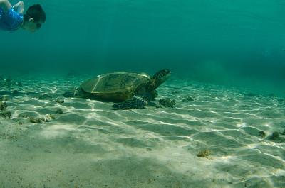 綠蠵龜,自然美,水,男孩,人生目標清單,考艾島,海龜,水下,自由,知識