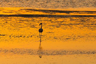 鸟类,小火烈鸟,伊兹密尔,火烈鸟,爱琴海,水,水平画幅,无人,野外动物,夏天