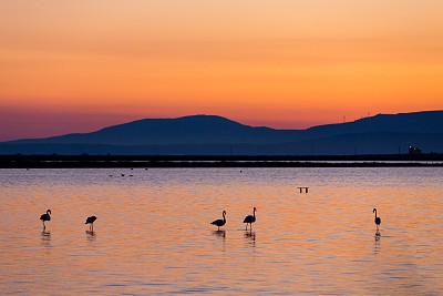 鸟类,小火烈鸟,伊兹密尔,爱琴海,水,水平画幅,无人,野外动物,夏天,户外