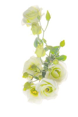 凹陷的,lisianthus,x光片,半透明,雄蕊,多年生植物,母亲节,垂直画幅,美,消息