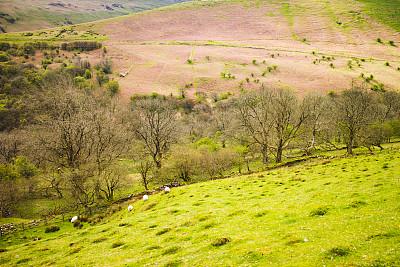 布雷肯国家公园,小路,山谷,英国国家信托基金,南威尔士,水平画幅,地形,无人,原野,威尔士