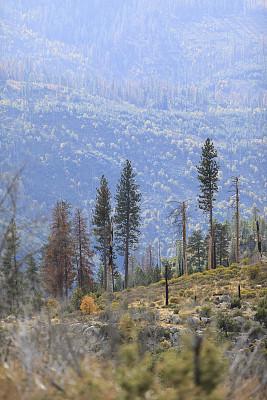 秋天,风景,自然美,白昼,热,欧洲赤松,在上面,热霾,加利福尼亚内华达山脉,森林火灾