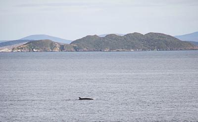 小须鲸,智利,南极洲,德雷克海峡,开普合恩,南极小须鲸,鲸,无人,图像,水平画幅