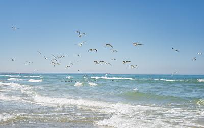 羊群,黑脊鸥,海鸥,瑞典,大群动物,海洋生命,丹麦,风,海浪,鸟类