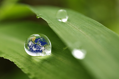雨,叶子,水滴,泥土,概念,重新造林,雨滴,水,留白,水平画幅