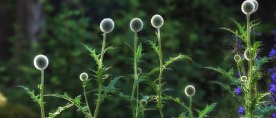 自然美,园林,天空,水平画幅,枝繁叶茂,夜晚,无人,早晨,草坪,夏天