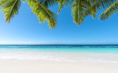 夏天,鸡尾酒,天体海滩,夏季系列,日夜转换系列,气候与心情,加勒比海,棕榈叶,绿松石色,棕榈树