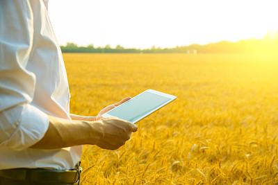 小麦,田地,男人,使用平板电脑,远程工作,栽培植物,触摸屏,农民,留白,水平画幅