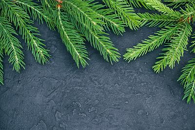 黑色,常绿树,石片,国境线,在上面,自然,松树,边框,水平画幅