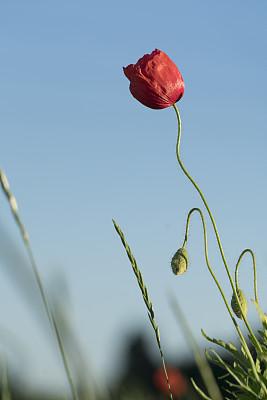 田地,自然,垂直画幅,选择对焦,天空,绿色,无人,蓝色,夏天,户外