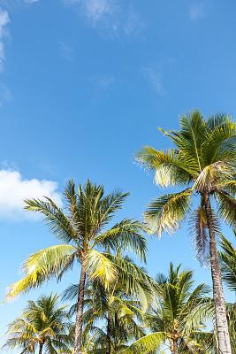 棕榈树,树梢,棕榈叶,垂直画幅,天空,留白,休闲活动,巴厘岛,无人,传统