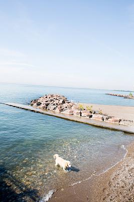 狗,湖岸,爪子,小别墅,海滩度假,垂直画幅,沙子,无人,湿,动物习性