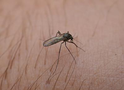 蚊子,特写,皮肤,贾第虫病,西尼罗河病毒,黄热病,切昆贡亚热,病媒,登革热,吸血动物