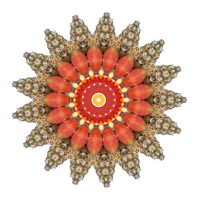 式样,抽象,热带水果,洋葱花,桔子,芒果 ,菠萝,留白,无人,几何形状