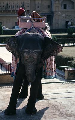 琥珀宫殿,象,印度,出租车,琥珀堡,亚洲象,斋浦尔,垂直画幅,彩色图片,无人